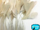 Ivory Stripped Coque Tail Feathers Wholesale (Bulk)