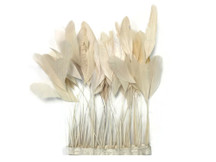 1 Yard - Ivory Stripped Coque Tail Feathers Wholesale (Bulk)