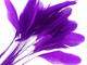 Violet dyed cut rooster feathers