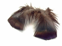 1 Pack - Black Bronze Wild Turkey T-Base Plumage Feathers 0.20 Oz.