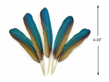 4 Pieces - Iridescent Green And Yellow Greenwing Macaw Feather -Rare-