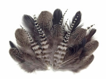 Stripes and unique patterned natural feathers
