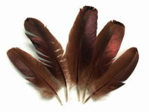 10 Pieces - BRONZE Wild Turkey Wing Feathers