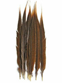 "50 Pieces - 20-25"" Natural Golden Pheasant Tail Wholesale Feathers (Bulk)"