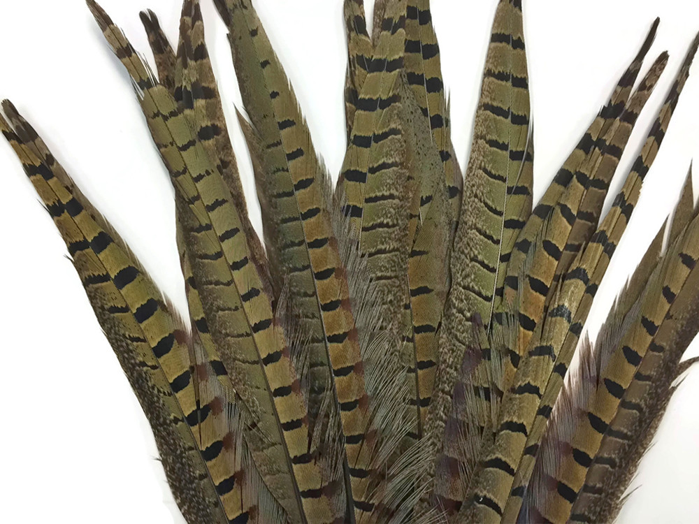 """12-14/"""" NATURAL Lady Amherst Pheasant Tail Feathers 10 pieces"""