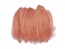 1 Pack - Champagne Goose Nagoire Loose Feather - 0.25 Oz.