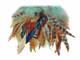 Aqua dyed natural craft feather strip