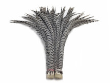 "5 Pieces - 30-35"" Zebra Black And White Lady Amherst Pheasant Tail Super Long Feathers"