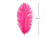 "10 Pieces - 14-17""  Hot Pink Ostrich Dyed Drab Body Feathers"