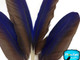 Cruelty free blue and brown craft feathers