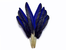 Iridescent Blue Hyacinth Macaw Wing Feather