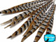 """16-18"""" Natural Reeves Venery Pheasant Tail Feathers"""