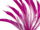 Neon pink fluffy feathers