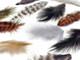 Brown black and tan fluff striped rooster craft feathers