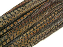 "50 Pieces - 14-16"" Natural Ringneck Pheasant Tail Wholesale Feathers (Bulk)"
