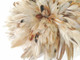 Natural colored brown fluffy long rooster feathers