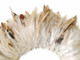 Brown and cream patterned strip of soft craft feathers