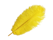 "10 Pieces - 14-17"" Yellow Ostrich Dyed Drab Body Feathers"