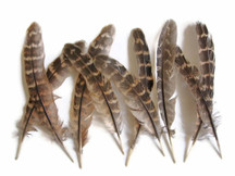 "1/4 Lb - 4-6"" Natural Ringneck Pheasant Wing Round Quills Wholesale Feather (Bulk)"