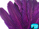 Purple Polka Dot Guinea Fowl Wing Quills Feathers