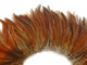 Natural reddish brown fluffy rooster feathers