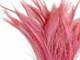 Light pink wispy fluffy slim peacock feathers