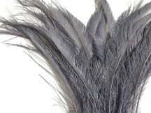 Silver Grey Bleached Peacock Swords Cut Feathers