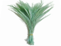 50 Pieces - AQUA GREEN Bleached Peacock Swords Cut Wholesale Feathers (bulk)