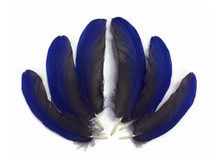 Blue Hyacinth Small Wing Feathers - Rare