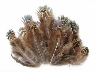 Green Almonds Ringneck Pheasant Wholesale Feathers (Bulk)