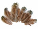Brown fluffy natural colored pheasant feathers