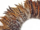 Fluffy natural colored rooster feathers