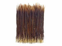 "50 Pieces - 12-14"" Natural Golden Pheasant Tail Wholesale Feathers (Bulk)"