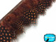 Brown Guinea Hen Plumage Feather Trim