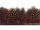 Brown dotted fluffy feather trim