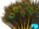 Yellow Mini Natural Peacock Tail Body Feathers With Eyes