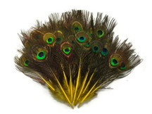 10 Pieces - Yellow Mini Natural Peacock Tail Body Feathers With Eyes