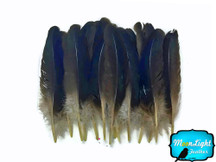 Iridescent Mallard Primary Duck Wing Feathers