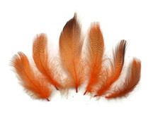 Light orange short wispy feathers