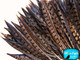 Natural patterned pheasant feathers