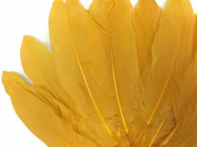 Mustard Antique Yellow quill tip feathers
