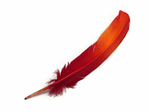6 Pieces - Fiery Red Ombre Turkey Round Tom Wing Quill Feathers