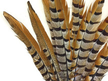 Tall stiff unique rare pheasant feathers brown red yellow stripes