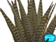 Medium length brown natural colored feathers