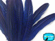 Deep blue dotted stiff quill feathers