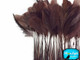Chocolate brown trimmed skinny feathers