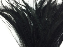 Black dyed dark wispy stiff long trimmed peacock feathers