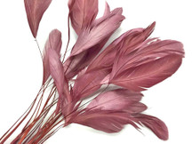 Taupe Stripped Rooster Coque Tail Feathers