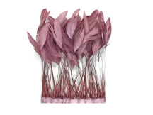Taupe Stripped Coque Tail Feathers Wholesale (Bulk)