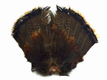 Full set of wild turkey tail feathers. This set comes from one merrium turkey. These feathers re black and brown with a light blonde sheen at the tips.